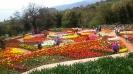 Парад тюльпанов Никитский  ботанический сад_7